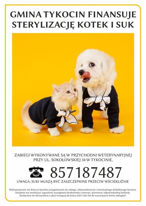 Gmina Tykocin finansuje sterylizację kotek i suk